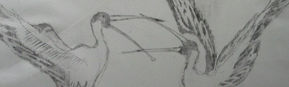 Lachende vogels