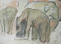 Pasteltekening  met olifanten in artis